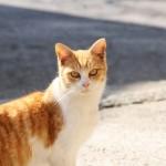 飼い猫が幼児救う 感動の一部始終とは?