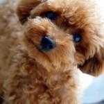 視力を失った愛犬が光を取り戻し飼い主と再開。感動の一部始終。犬との10の約束